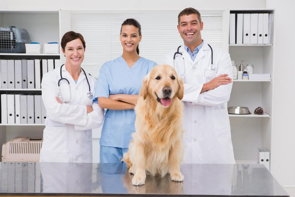 group of veterinarians with dof